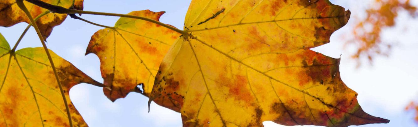 jesienne-liście
