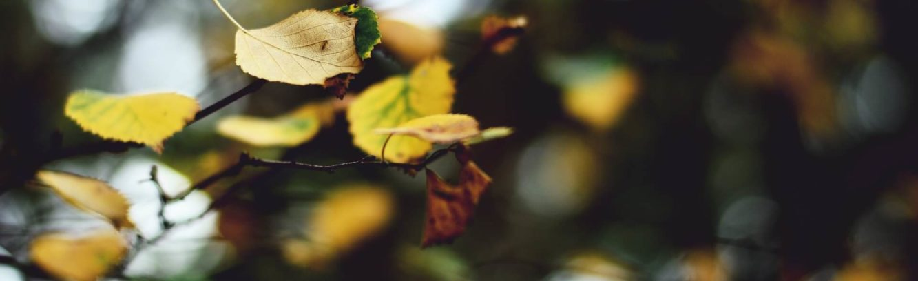 zblizenie-na-galaz-jesienia